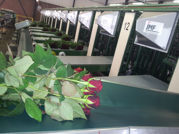 Rose bunching machine Image